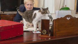 Katten Larry på Johnsons skrivebord. Foto