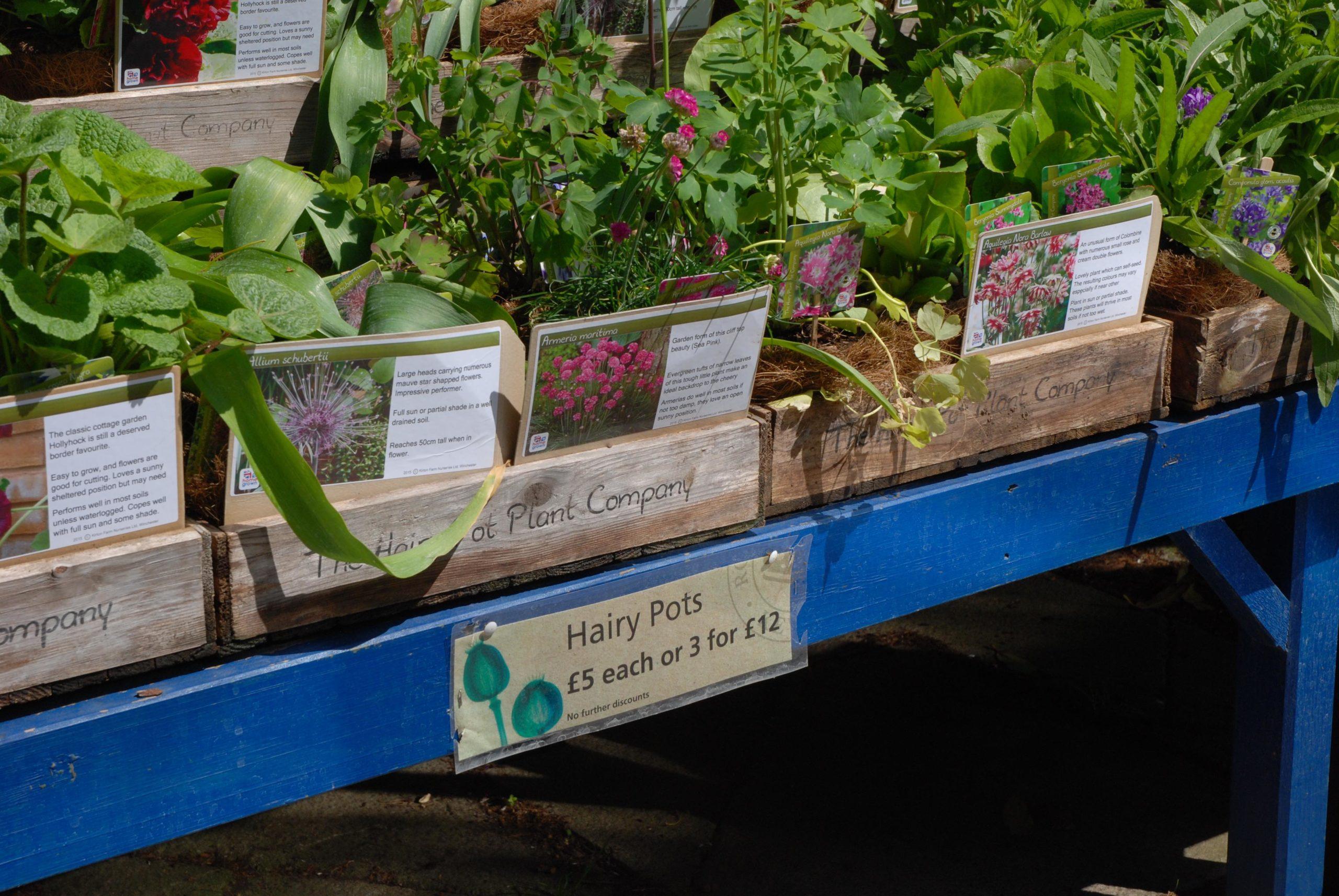 Planter i hagesenter England. Foto